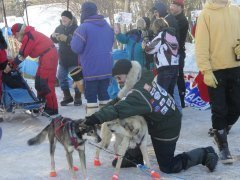 The vet petting two sled dogs