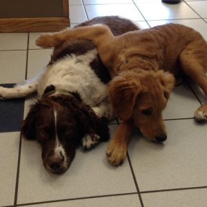 Two dogs named Finnley and Oakley laying down cuddling