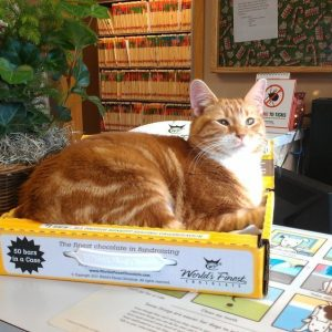 An orange kitty sitting in a box on the front desk