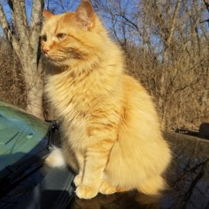 A orange kitty named Murder Cakes looking for birds